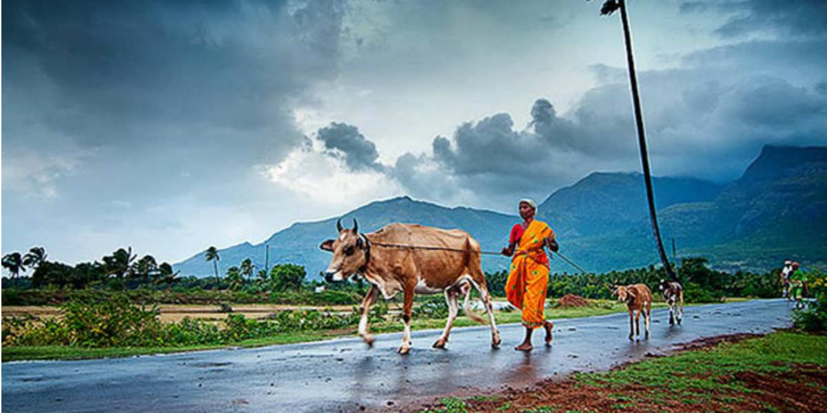 monsoons in india 1) monsoons, or the most severe form of monsoons, usually occur in southern asia this project is about india, so i will be focusing more on india but monsoons happen in many different places.